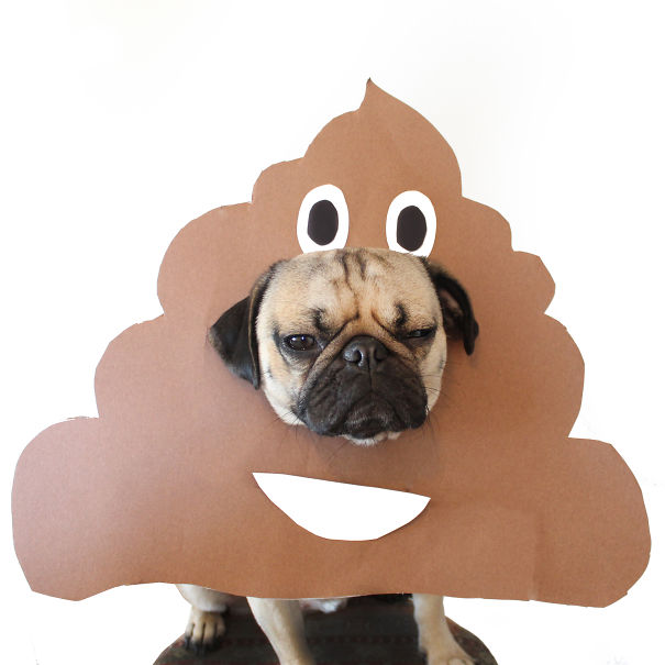 Needs to analyze your Poop just download an App. Most Dumbest Applications ever developed!!! Useless, Fruitless, Hopeless :(