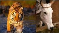 Hindutva Groups3