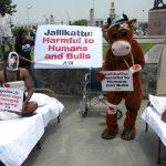 Political parties supporting resumption of Jallikattu have Tamil Nadu polls on their mind
