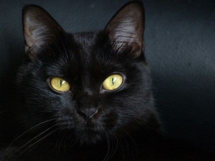 common superstitions, left eye twitching superstition, lucky charms, science and superstition, superstitions around the world