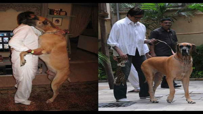 The day Amitabh Bachchan adopts a street dog, the fate of man's best friend will change forever!
