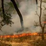 Who set the Uttarakhand forests on fire?